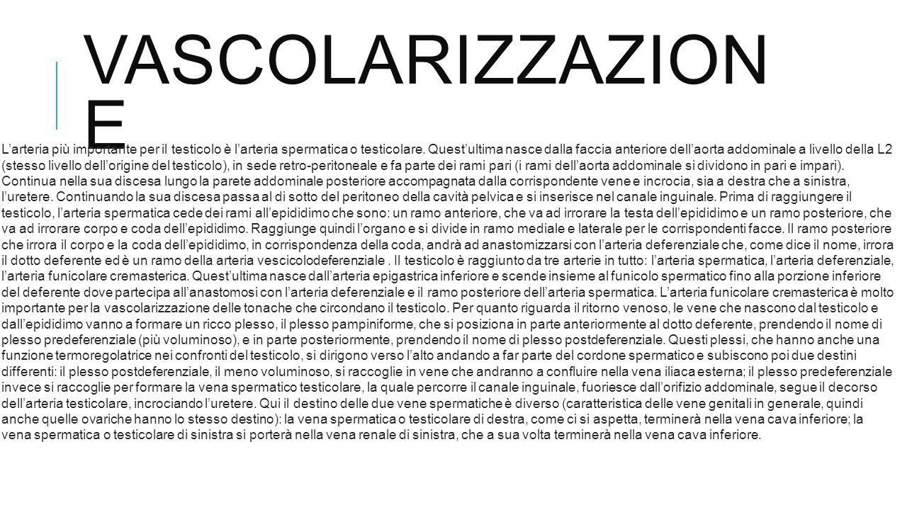 | modifica wikitesto] Vascolarizzazione